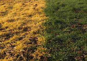 Chemische Unkraut Und Rasenvernichtung   Unkraut Im Rasen